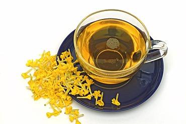 Herb tea made of cowslip, Primula officinalis,