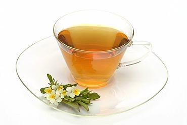 Herb tea made of Heartsease, wild pansy, Viola tricolore,
