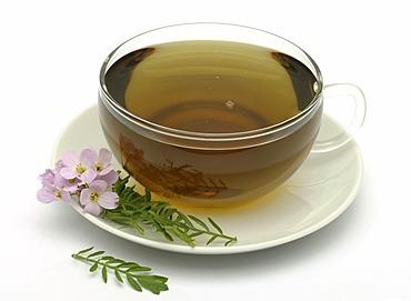 Herb tea made of Bog pink, cuckoo flower, Lady's smock, milkmaids, Cardamine pratense