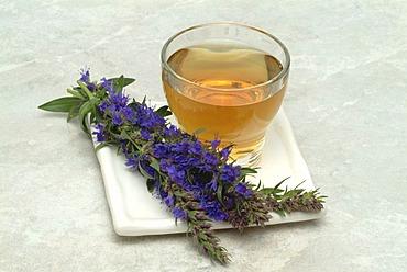 Herb tea made of Hyssop, Hyssopus officinalis