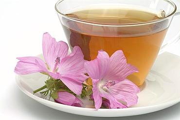 Herb tea made of Musk mallow, medicinal tea, Malva moschate