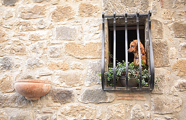 Dog in the old part of town, Bolsena, Latium, Italy