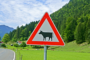Traffic sign, caution cattle crossing