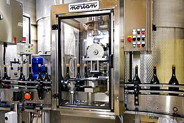 Filling in the winery of Ca Salina Prosecco, Valdobbiadene, Veneto, Italy, Europe