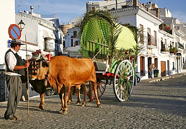 Bullocks pull a cart, Anadalusia, Spain