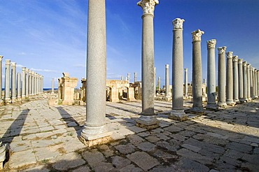 Columns in front of the theater at Leptis Magna, Libya, Unesco world heritage site
