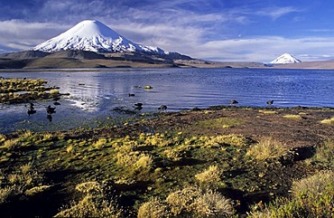 Volcanoe Parinacota (6342 m) and Lago Chungara, Lauca National Park, Chile