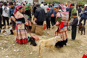 Animal market of Bac Ha, Ha Giang province, northern Vietnam