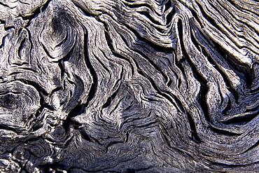 Burl wood, faded, weathered and cracked, Yukon Territory, Canada