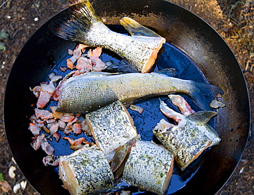 Frying pike over campfire, Yukon Territory, Canada