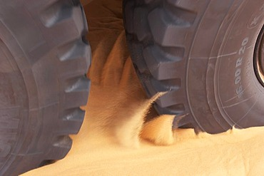Tire of a truck is digging through sand