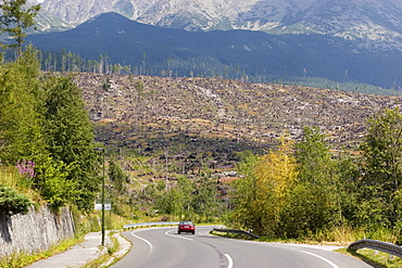 Hurricane damage on the Slovakian side of the High Tatras, almost half of the trees were destroyed by a hurricane on the 19th of November 2004, Slovakia