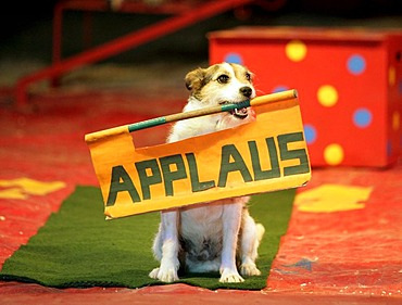 Dog wants to have applause in the circus