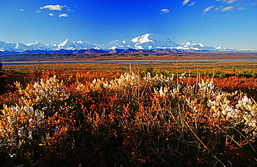 Mt. McKinley and the Alaska Range, colourful autumn tundra, Denali National Park, Alaska, USA