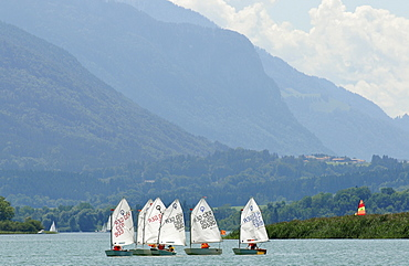 Sailing boats of the Optimists class on Chiemsee lake near Breitbrunn, Bavaria, Germany, Europe