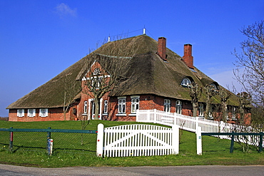 Haubarg Kutzenswarft, historic cottage with thatched roof in Westerhever, Eiderstedt Peninsula, North Frisia, North Sea coast, Schleswig-Holstein, Germany, Europe