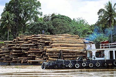 Barge loaded with logs for shipping, destruction of the rainforest, deforestation, Borneo, Southeast Asia