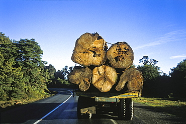 Destruction of the rainforest, deforestation, logs transported along the Pan-American Highway, Cerro de la Muerte, Costa Rica, Central America