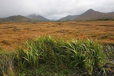 Mountain-landscape at Letterfrack , Connemara , Connacht , Ireland , Europe