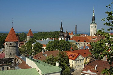 City Wall with fortified towers (Lower Town), Tallinn, Estonia, Europe