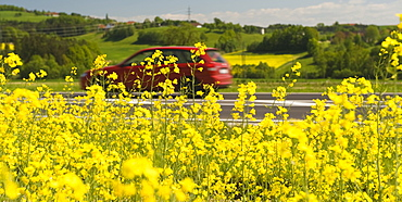 Car driving past a rape field, symbolic picture for bio fuel