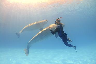 Freediver and Beluga, White whale (Delphinapterus leucas), Dolphinarium, Odessa, Ukraine, Europe