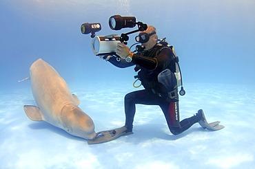 Video-operator and Beluga, White whale (Delphinapterus leucas), dolphinarium, Odessa, Ukraine, Eastern Europe