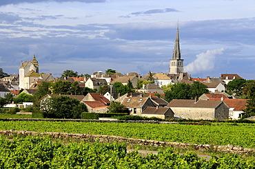 Vineyard in front of the village of Meursault, Burgundy Wine Road, Cote d'Or, Burgundy, France, Europe