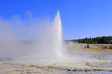 Sawmill Geyser, Upper Geyser Basin, Yellowstone National Park, Wyoming, USA