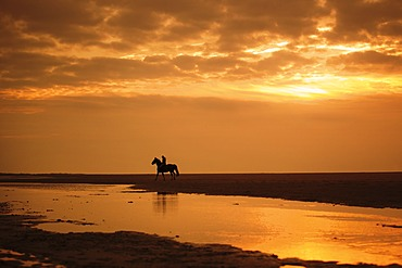 Horserider at sunset on the beach of Borkum, Lower Saxony, Germany