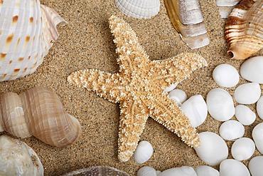 Starfish between shells on sand