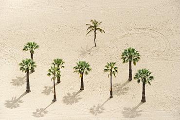 Bird's eye view, palm trees and beach, Playa de las Teresitas, San Andres, Tenerife, Canary Islands, Spain, Europe