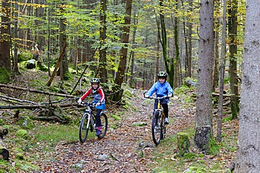 Children riding mountain bikes in a forest near Grainau, Werdenfelser Land, Upper Bavaria, Bavaria, Germany, Europe