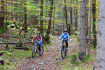 Children riding mountain bikes in a forest near Grainau, Werdenfelser Land, Upper Bavaria, Bavaria, Germany, Europe