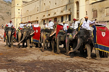 Elephant ride to Amber Palace, Rajasthan, northern India, Asia