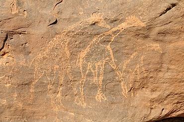 Giraffe engraving, neolithic rock art of the Tadrart, Tassili n'Ajjer National Park, Unesco World Heritage Site, Algeria, Sahara, North Africa