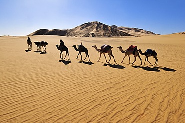 Touareg camel caravane travelling through low sand dunes of Erg Mehejibad, Immidir, Algeria, Sahara, North Africa