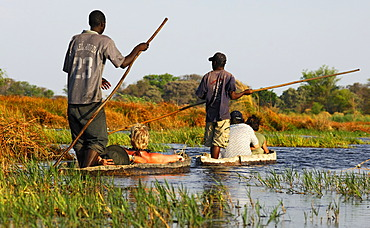 Boatsmen with tourists in traditional Mokoro dugout canoes, excursion in the Okavango Delta, Botswana, Africa