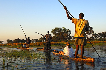 Punters with tourists in the traditional Mokoro dugout canoes on excursion in the Okavango Delta, Botswana, Africa