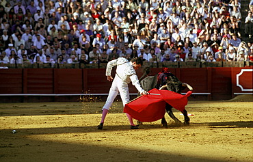 Bullfight at the Plaza de Toros, Seville, Andalusia, Spain, Europe