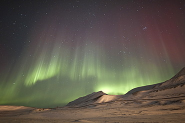 Green and red polar lights, northern lights, aurora borealis above a snow-covered landscape, landscape being illuminated by lights from civilisation, Spitsbergen, Svalbard, Norway, Europe
