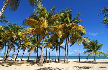 Beach with palm trees, Isla Verde, San Juan, Puerto Rico, Caribbean