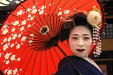 A Maiko, a trainee Geisha, carrying a red sun parasol or umbrella, Kyoto, Japan, Asia