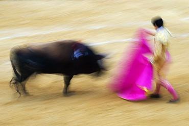 Torero and bull, blurred bull fight, Benidorm, Spain, Europe
