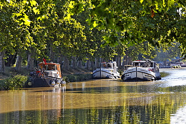 Canal du Midi near Homps, harbour with promenade and restaurants, Carcassonne, Languedoc-Roussillon, Aude, France, Europe