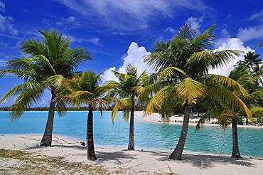 Palm trees at the beach, St. Regis Bora Bora Resort, Bora Bora, Leeward Islands, Society Islands, French Polynesia, Pacific Ocean