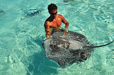 Man swimming with a stingray (Dasyatis sp.), Stingray World, Hauru Point Moorea, Windward Islands, Society Islands, French Polynesia, Pacific Ocean
