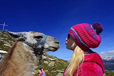 Young woman with a llama, llama tour to the summit of Boeses Weibele Mountain in the Defregger Group, Carnic Dolomites, Upper Lienz, Puster Valley, East Tyrol, Austria, Europe