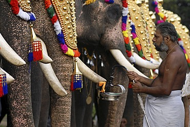 Decorated elephants and Hindu priests, Pooram festival, Thrissur, Kerala, South India, India, Asia