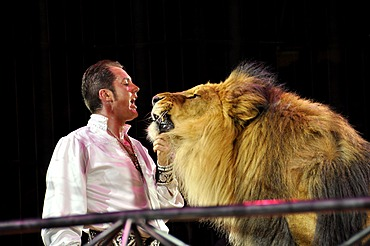 Lion-dressage, trainer Martin Lacey Jr. with the lion Kasanga, Circus Krone, Munich, Bavaria, Germany, Europe